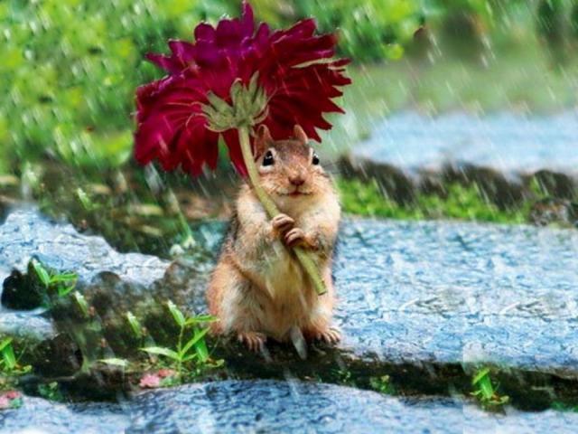 écureuil sous parapluie fleur