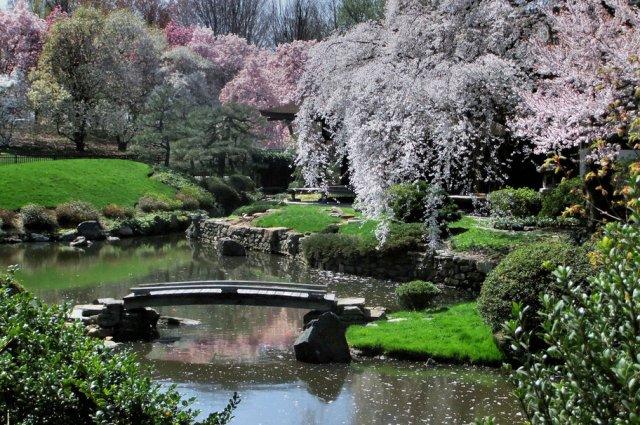 Humble pont de sakura