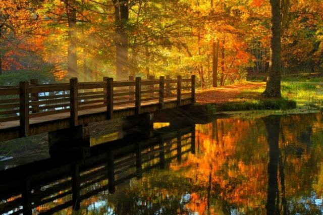 pont-parc-automne